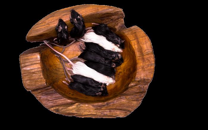Maus Adult gefrostet 25 Stück