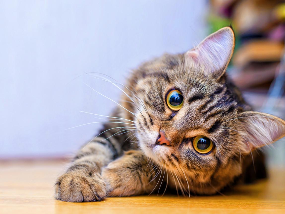 Gesunde <br>Katzennahrung